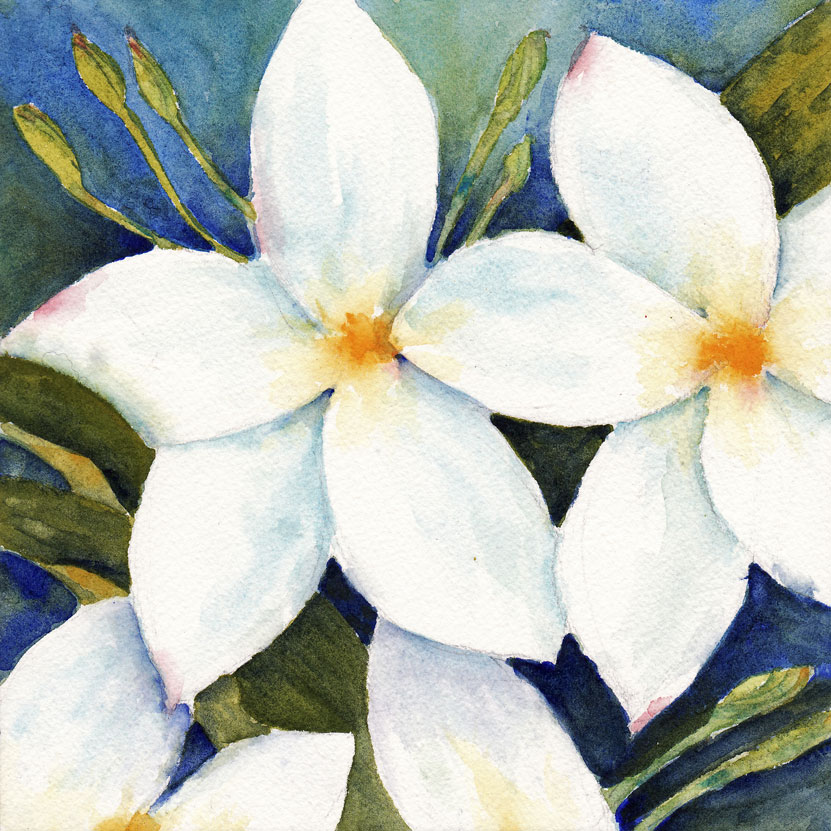 Live cheap make art studios scroll down to access the gallery day 30 white flower mightylinksfo